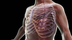 232029797-cartilage-costal-vertebre-thoracique-cage-thoracique-torse