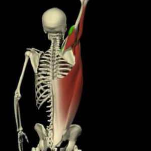 Arm-flexion